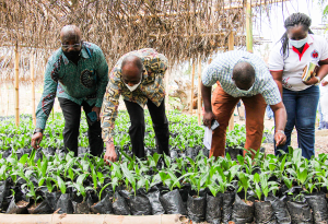 Planting for Export and Rural Development(PERD) 2020